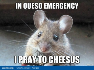 in-queso-emergency-i-pray-to-cheesus-jesus-mouse-cheese-meme